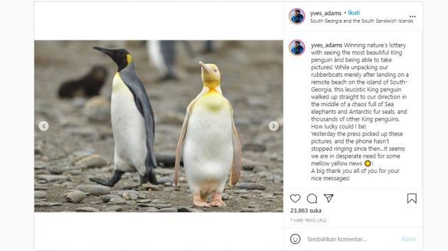 Penguin kuning langka. [Instagram]