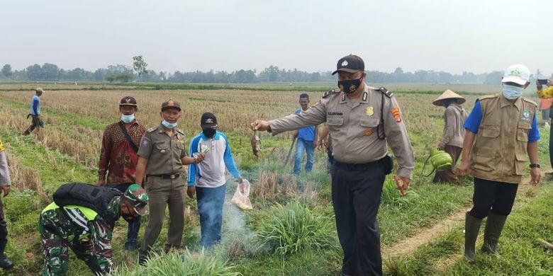 Aksi Grabiogon membasmi hama tikus yang merusak lahan jagung milik petani, Kamis (3/6/2021) di Kecamatan Seputi Raman, Lampung Tengah.